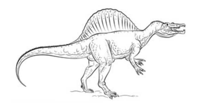 spinosaurus zeichnen schritt für schritt tutorial für kinder