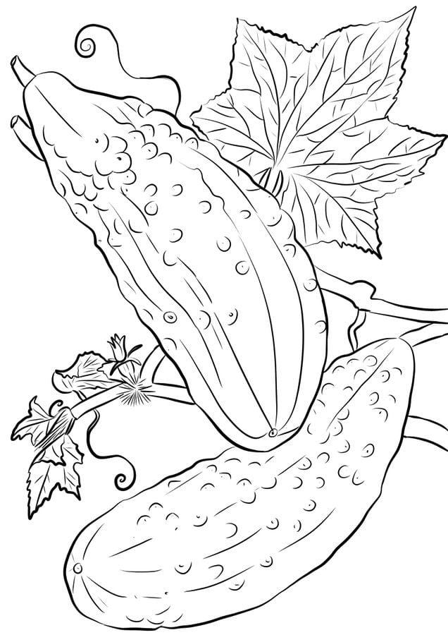 Ausmalbilder: Gurke Ausmalbilder Gemüse Pflanzen