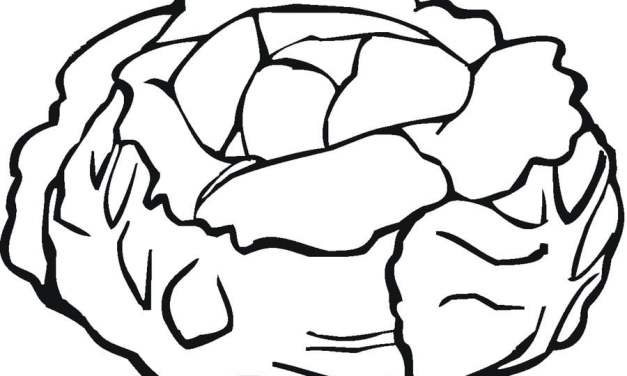 Coloring pages: Lettuce