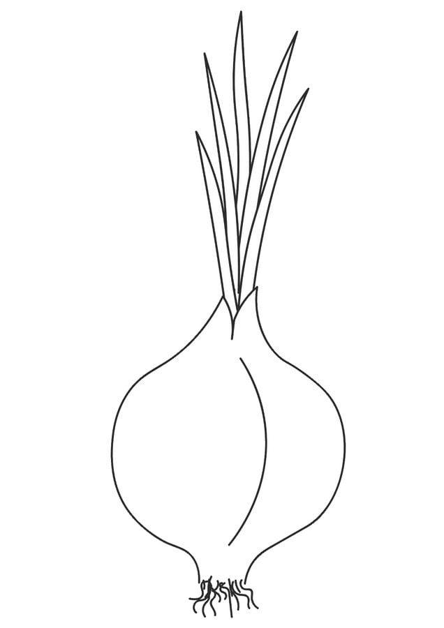 Ausmalbilder: Zwiebel Ausmalbilder Gemüse Pflanzen