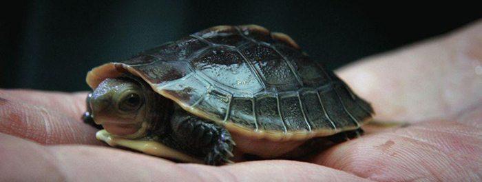 winter - turtle - print media centr