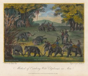Ava: Method of catching Wild Elephants. Drawn by Singey Bey, the Bengali artist who accompanied Symes