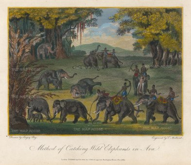Ava. Method of catching Wild Elephants. Drawn by Singey Bey, the Bengali artist who accompanied Symes