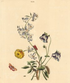 Ranunculus, Black Thorn, Columbine, White bells and a Spotted red and white underwing Moth.