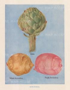 Globe, White and Purple Jerusalem Artichokes.