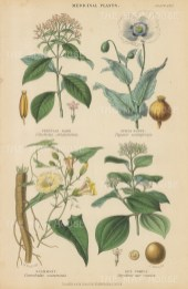 "Blackie: Medicinal Plants. 1850. An original hand coloured antique steel engraving. 5"" x 11"". [FLORAp3170]"