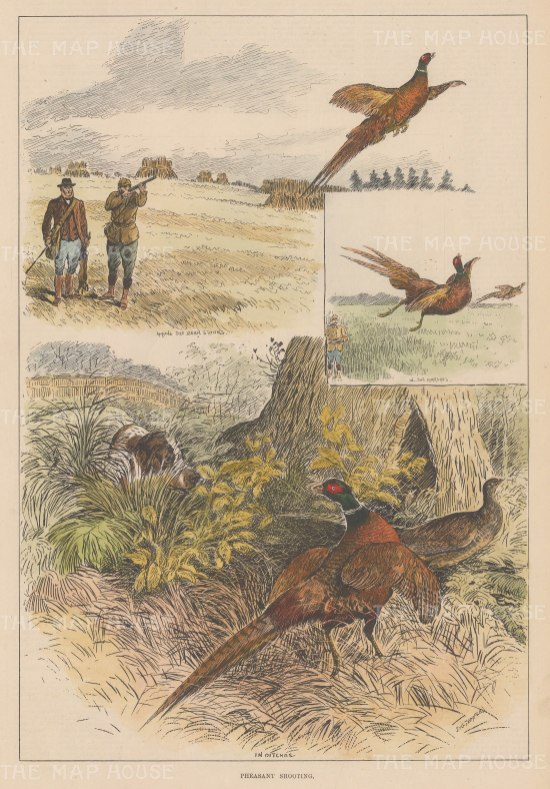 "Illustrated London News: Pheasant Shooting. 1881. A hand coloured original antique wood engraving. 9"" x 14"". [FIELDp1559]"