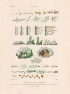 Types of sponges observed on the voyage of La Bonite 1836-7.