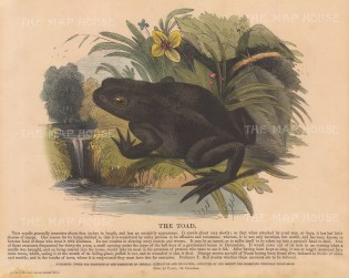 Toad, Bufo vulgaris: with descriptive text. Founded in 1698, the SPCK is the oldest Anglican mission and publishing house of the Church of England.