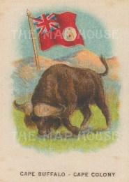"Cigarette Cards: Cape Colony. c1900. Original printed colour on silk. 2"" x 3"". [ARMp15]"