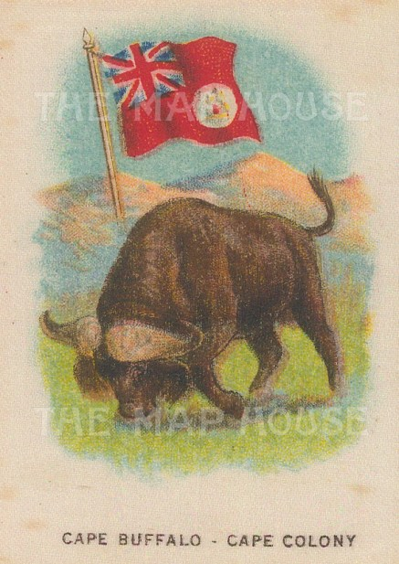"Cigarette Cards: Cape Colony. c1900. Original printed colour on silk. 2"" x 3"". [ARMp15]"