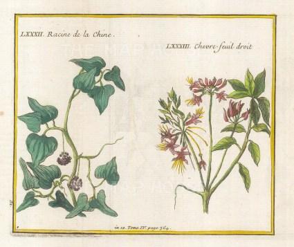 "Bellin: Honeysuckle and Racine de la Chine. 1753. A hand coloured original antique copper engraving. 6"" x 5"". [FLORAp3122]"