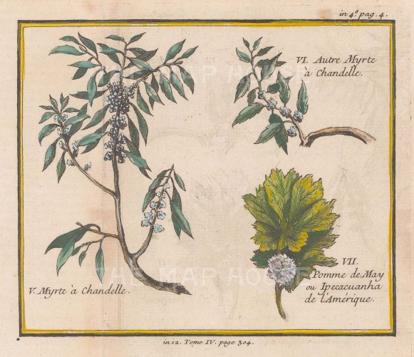 """Bellin: Candle-berry Myrtle and Virginian May Apple. 1753. A hand coloured original antique copper engraving. 6"""" x 5"""". [FLORAp3176]"""