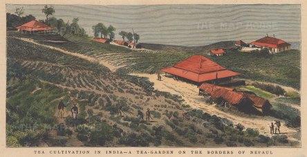 "Graphic Magazine: Tea gardens, Nepal. 1883. A hand coloured original antique wood engraving. 9"" x 5"". [INDp1496]"