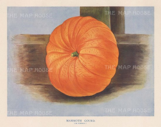"Wright: Pumpkin. 1890. An original antique chromolithograph. 10"" x 7"". [NATHISp4993]"
