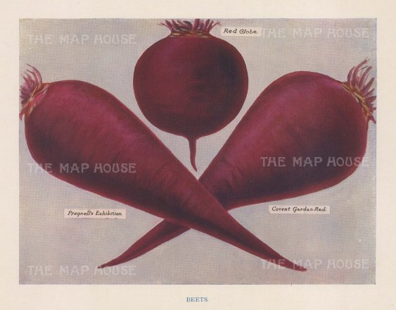 Beetroot: Pragnell's Exhibition; Red Globe and Covent Garden Red,