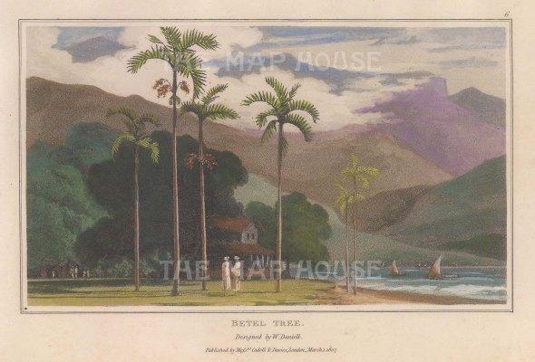 "Daniell: Betel Tree. 1807. A hand coloured original antique aquatint. 7"" x 4"". [NATHISp7871]"