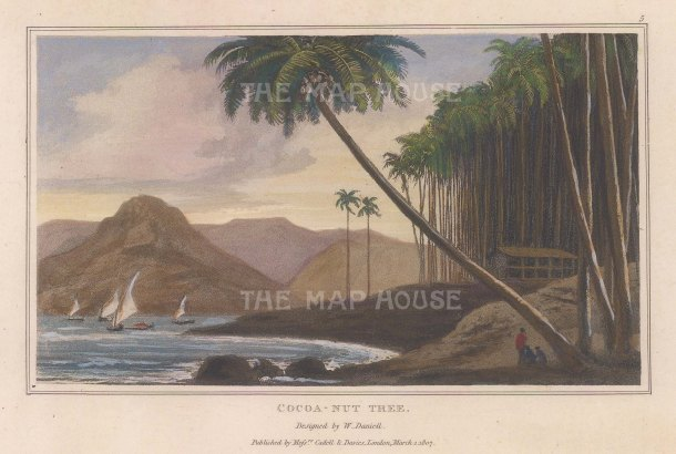 "Daniell: Coconut Trees. 1807. A hand coloured original antique aquatint. 7"" x 4"". [NATHISp7873]"