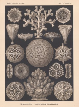 Coral: Hexacoralla.15 examples. Key available.