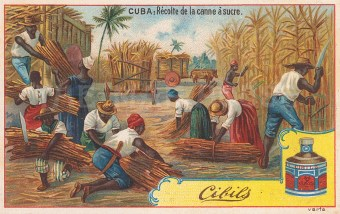 "Cibils: Sugar, Cuba. 1900. An original antique chromolithograph. 5"" x 3"". [WINDp1207]"
