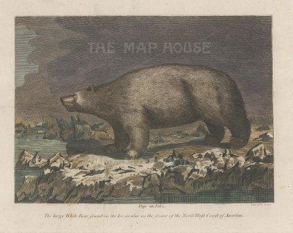 """Bankes: Polar Bear. 1780. A hand coloured original antique copper engraving. 8"""" x 7"""". [NATHISp7443]"""
