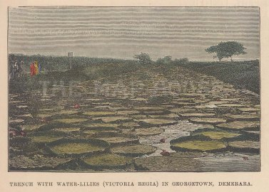 "Illustrated London News: Georgetown, Guyana. 1888. A hand coloured original antique wood engraving. 4"" x 3"". [SAMp958]"