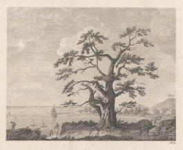 "Cook's Voyages: Matavi Bay, Tahiti. 1773. An original antique copper engraving. 10"" x 8"" [PLYp250]"