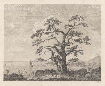 "Cook's Voyages: Matavi Bay. Tahiti. 1773. An original antique copper engraving. 10"" x 8"" [PLYp250]"