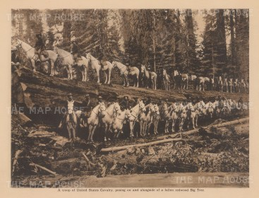 "Anonymous: US Cavalry. c1910. An original antique photogravure. 8"" x 6"". [USAp4754]"