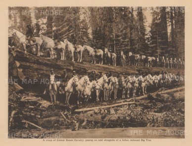 "Anonymous: US Cavalry. c1910. An original antique photogravure. 8"" x 6"". [USAp4754["