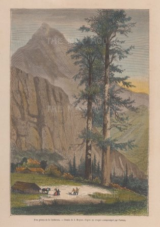 "Garnier: Sequoia Trees, Yosemite. 1876. A hand coloured original antique wood engraving. 6"" x 9"". [USAp5020]"
