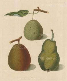 Pears: Three Varieties.