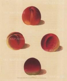 Peaches: Four Varieties: