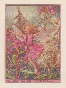 "Barker: Rose Bay Willow Herb Fairy. c1948. An original vintage chromolithograph. 3"" x 4"". [DECp2108]"