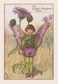 """Barker: Greater Knapweed Fairy. c1925. An original vintage chromolithograph. 3"""" x 4"""". [DECp1907]"""