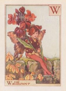 "Barker: Wallflower Fairy. c1934. An original vintage chromolithograph. 3"" x 4"". [DECp1947]"