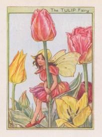 "Barker: Tulip Fairy. c1944. An original vintage chromolithograph. 3"" x 4"". [DECp1980]"