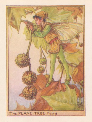"Barker: Plane Tree Fairy. c1940. An original vintage chromolithograph. 3"" x 4"". [DECp2028]"