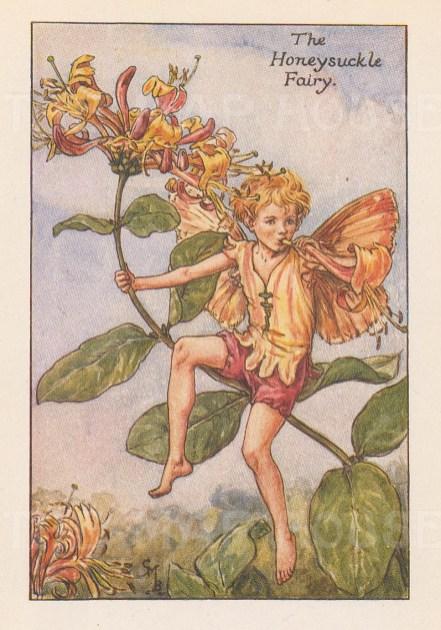 "Barker: Honeysuckle Fairy. c1925. An original vintage chromolithograph. 3"" x 4"". [DECp2056]"