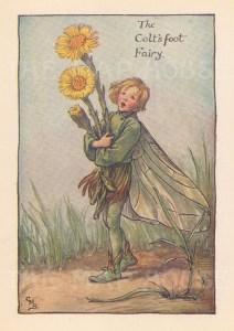 """Barker: Colt's Foot Fairy. c1923. An original vintage chromolithograph. 3"""" x 4"""". [DECp2084]"""