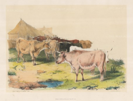 From a Sketch at Barnet Fair after the Edwardian artist known as Cow Cooper.