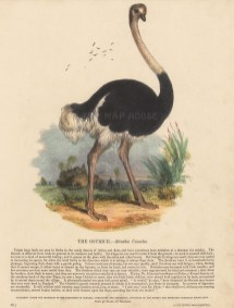 Ostrich with descriptive text. Founded in 1698, the SPCK is the oldest Anglican mission and publishing house of the Church of England.