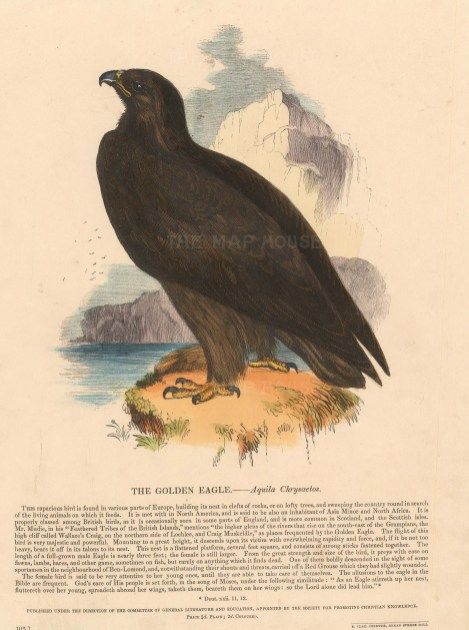 Golden Eagle with descriptive text. Founded in 1698, the SPCK is the oldest Anglican mission and publishing house of the Church of England.