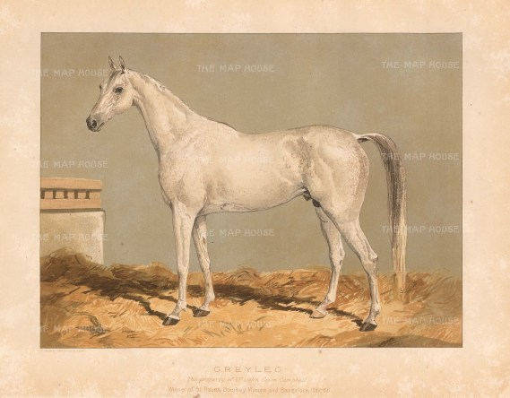 Winner at Bombay, Mysore, Bangalore, Newmarket and Epsom. From a portrait made at Bangalore.