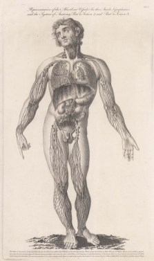 Vascular (Circulatory) System. Male figure with basic details of the system, and explanatory notes beneath.