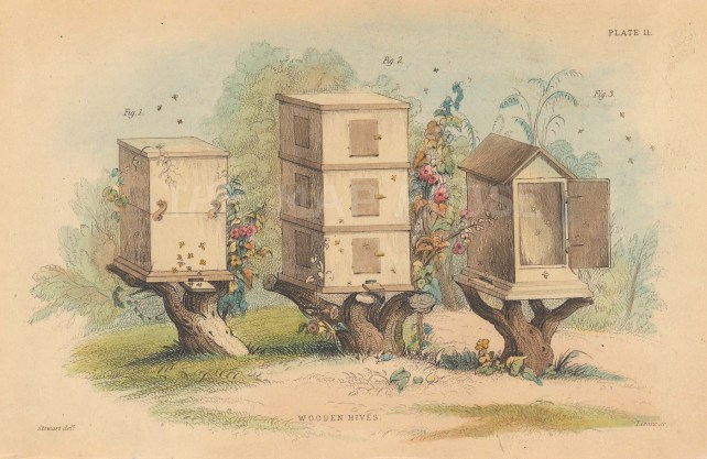 "Jardine: Bee Keeping. 1840. An original hand coloured antique lithograph. 6"" x 4"". [NATHISp8029]"