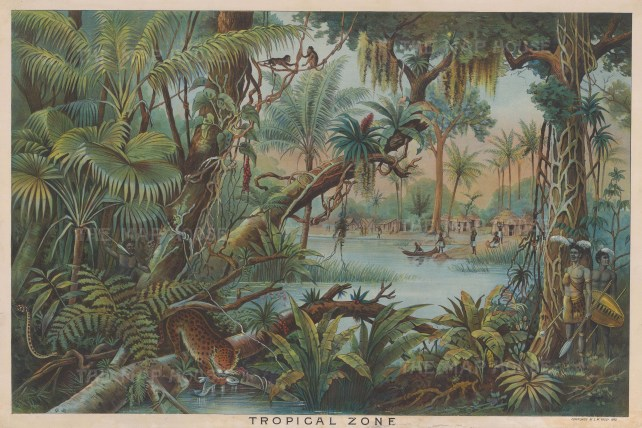 Tropical Zone: Comparative chart showing the flora, fauna, and inhabitants of a tropical environment.