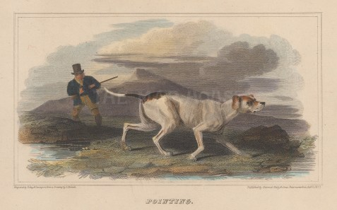 "Scott: Gun and working dog. 1818. A hand coloured original antique steel engraving. 6"" x 4"". [FIELDp1452]"