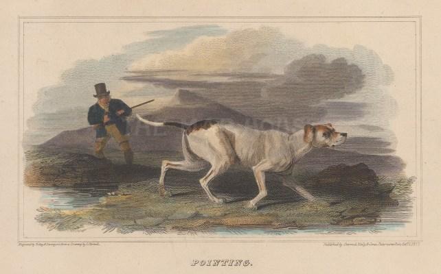 "Scott: Gun and working dog. 1818. A hand coloured original antique steel engraving. 6"" x 4"". [FIELDp1452]"