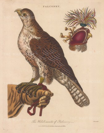 Falcon on a glove with a detail of its head and hood. After George Wolfgang Knorr, and engraved by John Pass.